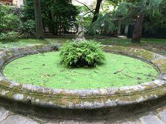 Fontän. Pisas botaniska trädgård.