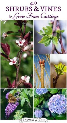 Shrubs & Vines to Grow from Cuttings Grow more of your favorite shrubs and vines by taking hardwood cuttings in the fall or early spring.Grow more of your favorite shrubs and vines by taking hardwood cuttings in the fall or early spring. Garden Shrubs, Lawn And Garden, Garden Plants, Garden Beds, Garden Benches, Garden Trellis, Fruit Garden, Garden Gates, Spring Garden