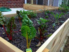 Garden Friends: Michael Nolan, The Garden Rockstar and His Raised Bed Template - Shawna Coronado