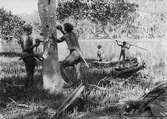 The History of the Axe and Related Tools in Australia - Shield Making, placing wedges into the bark to extract the shield in one piece. Aboriginal Culture, Aboriginal People, Aboriginal Art, Australian Aboriginal History, Stone Age People, Australian Aboriginals, Indigenous Education, Native Australians, Historical Images