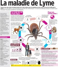 It's springtime in Canada — and with it comes warnings of Lyme disease. Diabetes, Insurance Marketing, Lyme Disease, Medical School, Health Education, Health And Wellbeing, Health Remedies, Knowledge, Information