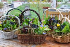 Rooted In Thyme: ~Making Kitchen Garden Salad Baskets For Friends~