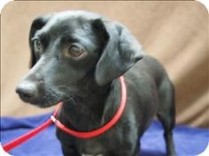 My name is Mimi and all I want to do is find a place to call my own. If you have been searching for an outgoing furry companion that you wan...