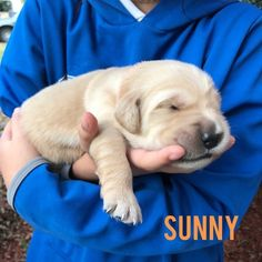 Female golden retriever puppies for sale in texas