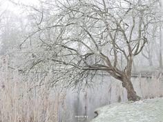 #mist #fogg #vorst #frost #winter #Julianapark #Bolsward #Friesland
