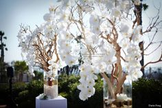 Manzanita-tree-with-orchids-wedding-ceremony