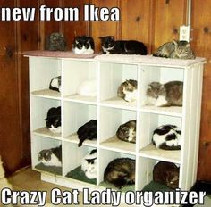 New From Ikea Crazy Cat Lay Organizer, Click the link to view today's funniest pictures!