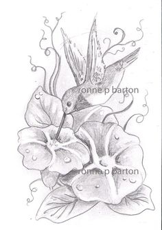 Hummingbird with Morning Glories original pencil sketch 4x6 drawing by Ronne on Etsy, $15.00