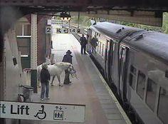 Unknown, (At Wrexham Station), 2011