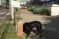 Voluntários espalham pela Capital estações com ração e água para cachorros de rua - Pelas Ruas - Porto Alegre: Notícias Locais - Zero Hora