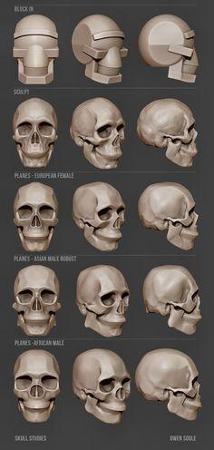 Soule Designs - Skull studies