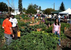Community gardens grow flowers, herbs, vegetables—and community. Photo courtesy of Kristen McIvor.
