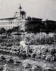 Large gardens that supplied the kitchens. Victor Hugo, Uncle Albert, Devon Rex Cats, Young Life, Bull Terrier Dog, Whippet, Silhouette, Wwii, Philippines