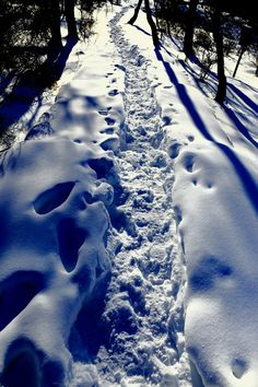 hiking trail...