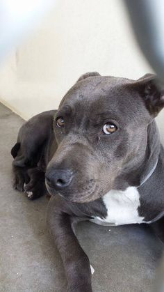CA - Carson Shelter Dogs - Please Sponsor for possible safety - Consider becoming a Foster Parent if only once.