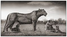 """sweet_savage"" - african fascination #nickbrandt #photography #africa"