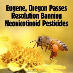 The City of Eugene, Oregon became the first community in the nation to specifically ban the use of neonicotinoid pesticides from city property, which have been scientifically linked to the decline of honeybee colonies. http://www.beyondpesticides.org/dailynewsblog/?p=12881
