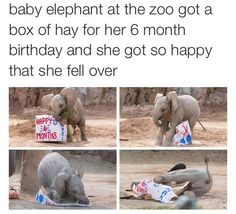 Baby Elephants Photos And Memes That Will Make You Smile Instantly - World's largest collection of cat memes and other animals Funny Animal Memes, Cute Funny Animals, Funny Animal Pictures, Cute Baby Animals, Funny Cute, Cute Dogs, Cute Babies, Funny Memes, Hilarious