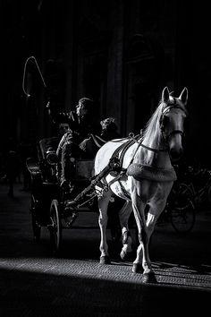 """ph. © Renzo Baggiani """"la carrozza del cavallo bianco"""" Ph, Horses, Animals, Fotografia, Animales, Animaux, Animais, Horse, Words"""