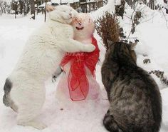 kitty hugs for snowman
