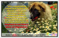 Like a meat eating canine that follows the impulse to eat grass because it offers something that its normal diet does not, we would like you to be at a place where you are inspired to eat from a place of alignment. Abraham-Hicks Quotes (AHQ2774) #workshop #healthy Health Heal, Abraham Hicks Quotes, Spiritual Wisdom, Perfect Body, Law Of Attraction, Jet Set, Best Quotes, Health And Beauty, San Francisco