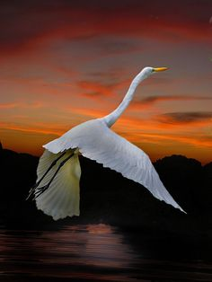 Sunset Flight