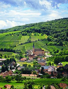 Alsace, a wonderful, less popular wine region which switches from France to Germany to France, depending on current politics.