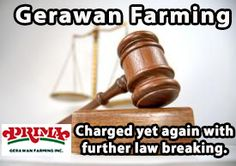 Gerawan workers asking for help in holding grocery stores accountable   When you go to the grocery store to buy fruits and vegetables, you assume your supermarket has done their work to make sure the produce you're going to purchase is grown responsibly and the workers who harvested that food weren't abused or exploited. After all, most supermarkets have a supplier code of conduct. You shouldn't have to worry about this, right?