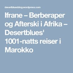 Ifrane – Berberaper og Afterski i Afrika – Desertblues' 1001-natts reiser i Marokko