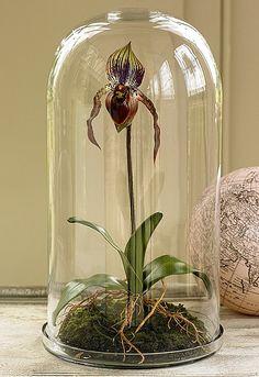 bell glass jar dome viktorwyndofhackney.co.uk/
