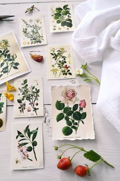 DIY Botanical Labels or Tags - 3 different borders