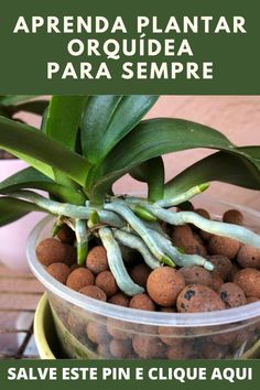 Agriculture, Green Beans, Exotic, Vegetables, Garden, Flowers, Plants, Bonsai, Animals