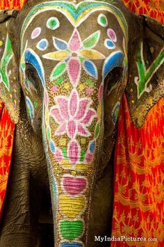 painted elephants national geographic - Google Search
