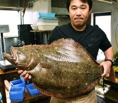 【田辺湾の沖で捕れた重さ11キロのヒラメ(16日、和歌山県田辺市中屋敷町で)】 - Yahoo!ニュース(紀伊民報)