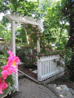 Rose Garden Arbor, William Baffin closeup, John Davis on Arbor | by Conifers2