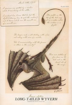 Dragon - Spiderwick Chronicles Wiki - Wikia