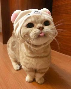 The Effective Pictures We Offer You About Cutest Baby Animals funny A quality picture can tell you m Cute Baby Cats, Cute Cats And Kittens, Cute Funny Animals, Funny Animal Pictures, Cute Baby Animals, I Love Cats, Kittens Cutest, Cute Dogs, Funny Cats