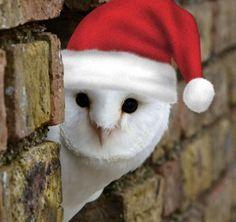 Santa barn owl Christmas Owls, Owl Art, Yule, Barn, Seasons, Wallpaper, Holiday, Animals, Owls