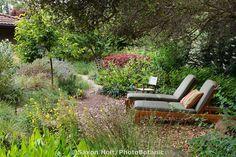 Lounge chairs under shady oak trees in back yard California native plant habitat garden, Schino