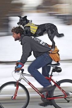 Cycling partners...Id live to see this.. Mans best friend