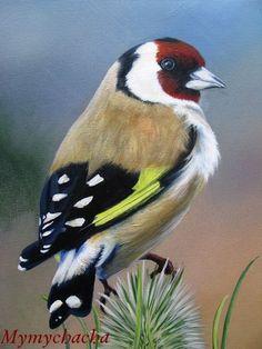 29 ideas pet bird photography for 2019 Tropical Birds, Exotic Birds, Colorful Birds, Small Birds, Little Birds, Pretty Birds, Beautiful Birds, Rare Animals, Animals And Pets