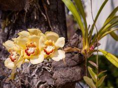 Veja como plantar orquídeas em árvores - Jardinagem - iG