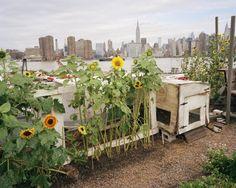 urban-farming-nyc-photo-by-Rob-Stephenson-3