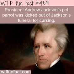 WTF Facts : funny, interesting & weird facts — President Andrew Jackson's pet parrot - WTF fun. Wtf Fun Facts, True Facts, Funny Facts, Funny Memes, Hilarious, Random Facts, Crazy Facts, Epic Facts, Strange Facts