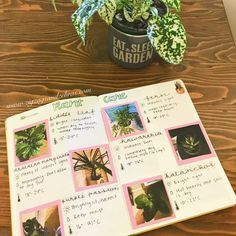 My Plant Care Bullet Journal Spread – ZigZags and Zebras Keeping Track Of House Plant Care In My Bullet Journal, Plant Care Bullet Journal, Gardening Spread, Houseplant Care Bullet Journal, Bujo Collection Garden Journal, Nature Journal, Snake Plant Care, Garden Planner, House Plant Care, House Plants Decor, Bullet Journal Spread, Bullet Journals, Garden Care