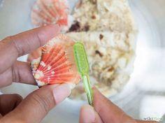 Muscheln reinigen und pflegen. How to clean and embellish seashells.