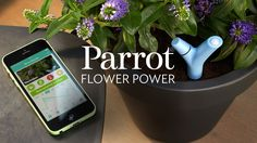 Flower Power by Parrot - intelligent wireless sensor for your plants. An incredible sensor that assesses your plants' needs and sends alerts to your smartphone.