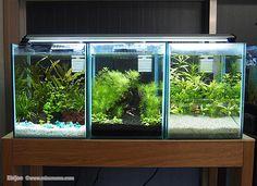 Aquarium Set, Mini Aquarium, Aquarium Stand, Tropical Fish Aquarium, Aquarium Design, Aquarium Fish Tank, Planted Aquarium, Aquascaping, Indoor Pond