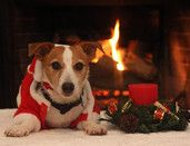 Vote for former GA JRT rescue Brodie in the Ho! Ho! Home for the Holidays Photo Contest. If he wins, he'll donate the Hawks tix back to rescue for the dogs.