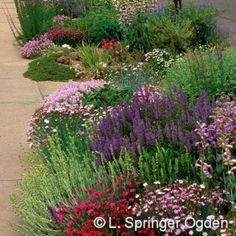 "Gardening solution for that narrow strip between sidewalk and street ""inferno strip"""